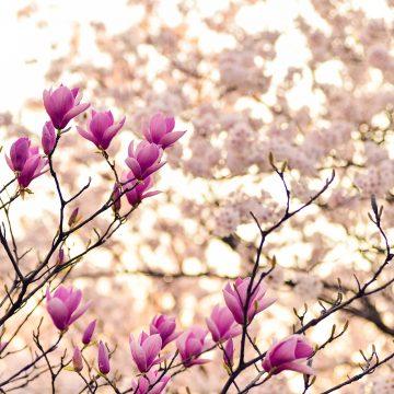 Un árbol y una flor para los signos de tierra